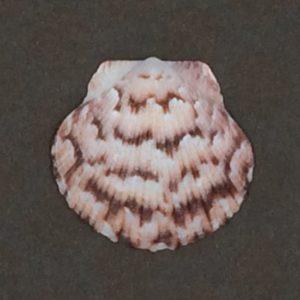 Mocadeaux - shell